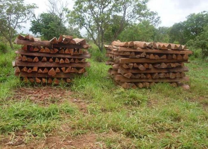 madeira de aroeira importada