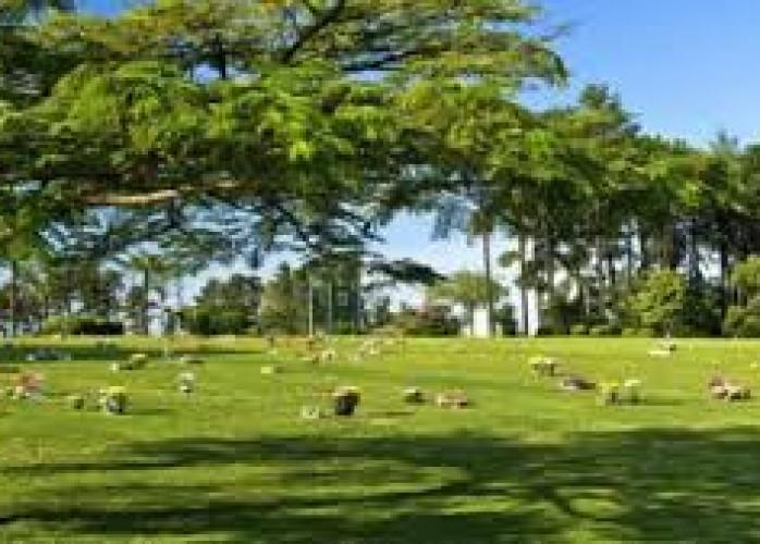 Vendo Jazigo Cemitério Parque das Flores