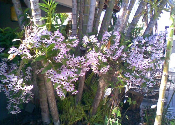 Orquidario com pallets – saulo turra | orquídeas | Jardim & Cia