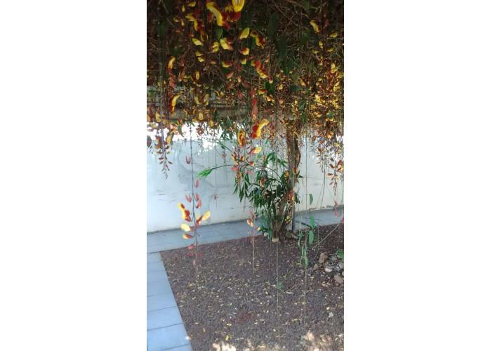 Flores e plantas Comércio de Plantas e Vasos - Londrina - Jardim&Cia sanfer