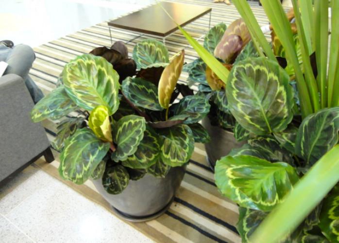Liro Paisagismo - Paisagismo - Locação de plantas e vasos