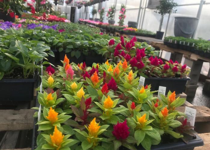 Jardino Garden - VASOS - Jardineiras Floreiras - Jardineiras Floreiras