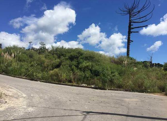 Colina dos Plátanos - Terreno a Venda no bairro Santa Catarina - Caxias do Sul, RS - Ref: WI82