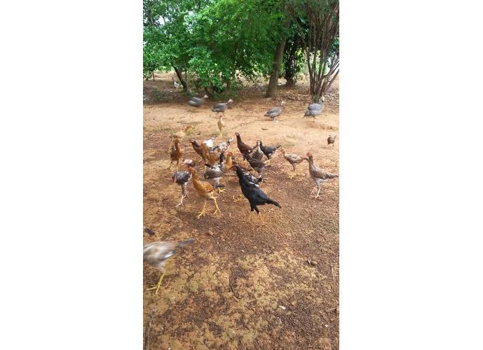 Fazenda a Venda em Três Marias - Fazenda a Venda no bairro Zona Rural - Três Marias, MG - Ref: LI78435