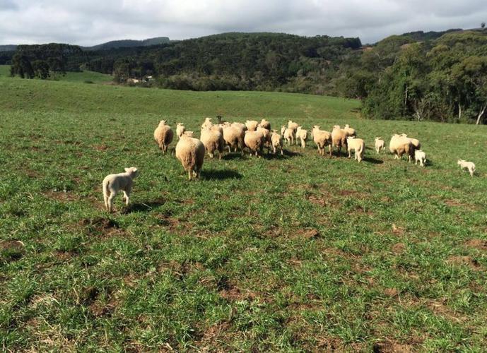 Fazenda Imbuia - Fazenda a Venda no bairro Área Rural - Ponta Grossa, PR - Ref: LU1441