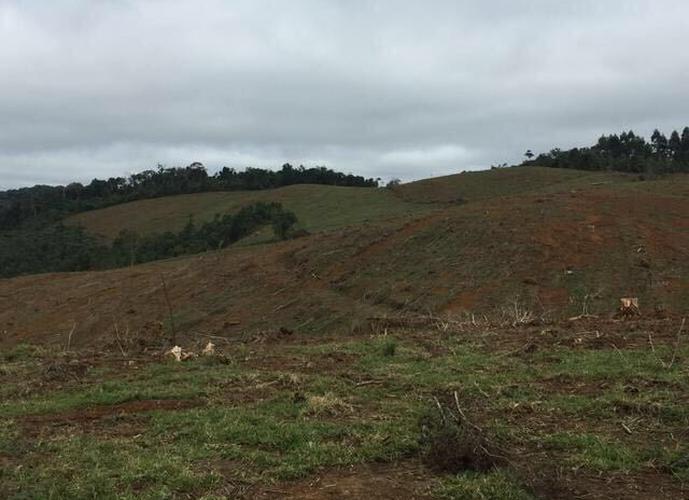 Fazenda a Venda no bairro Zona Rural - Tijucas Do Sul, PR - Ref: LU1777