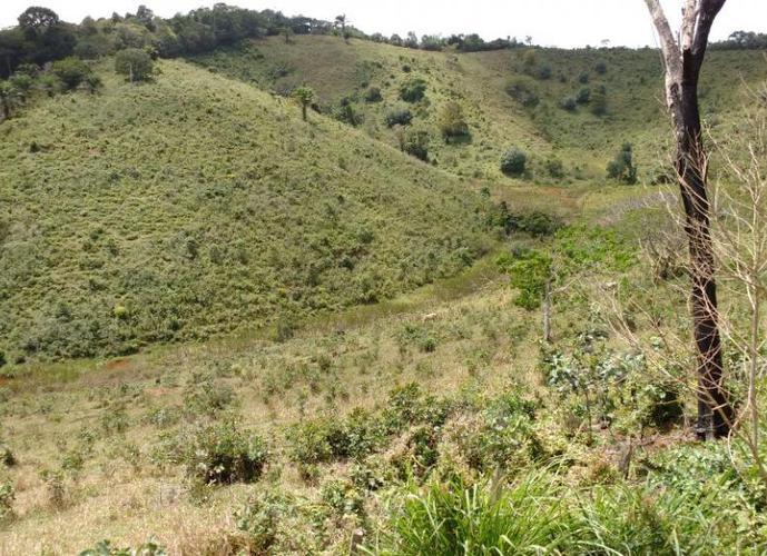 FAZENDA SEMPRE ALEGRE EM ILHÉUS / BUERAREMA - Fazenda a Venda no bairro 20k de Ilhéus - Ilhéus, BA - Ref: SC00175