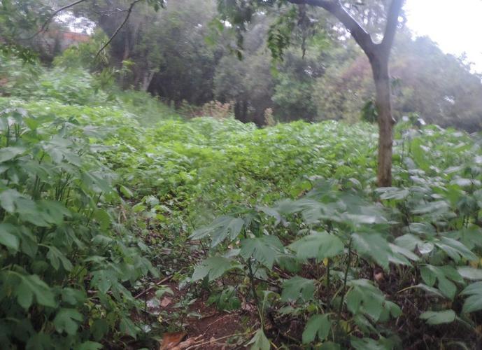 Terreno em Granja Viana/SP de 1980m² a venda por R$ 1.000.000,00